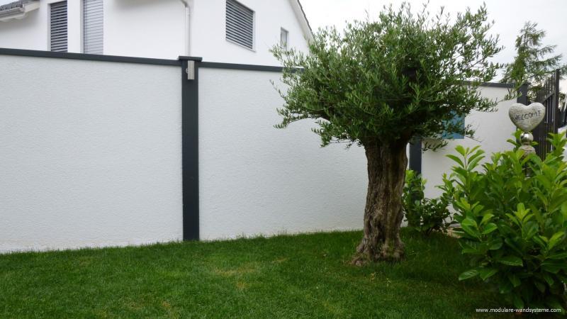 055SichtschutzwandmitaltemOlivenbaum